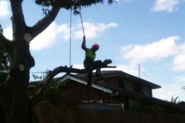 tree trimmers north brisbane